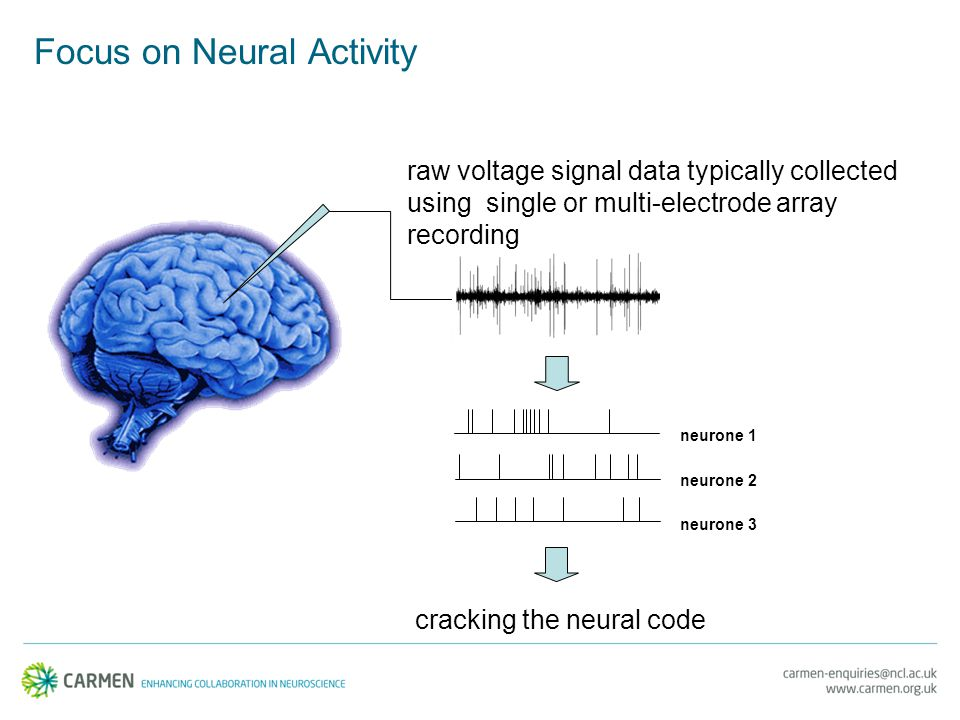 cracking the neural code neurone 1 neurone 2 neurone 3 raw voltage signal data typically collected using single or multi-electrode array recording Focus on Neural Activity