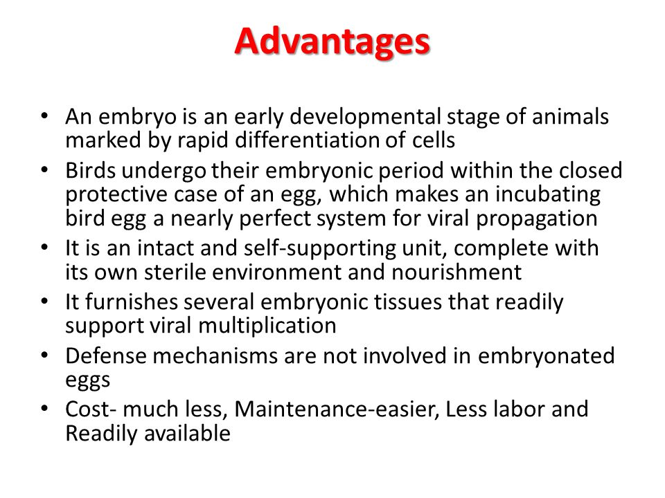 Advantages An embryo is an early developmental stage of animals marked by rapid differentiation of cells Birds undergo their embryonic period within t