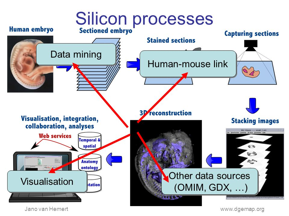 Jano van Hemertwww.dgemap.org Silicon processes Data mining Human-mouse link Other data sources (OMIM, GDX, …) Other data sources (OMIM, GDX, …) Visualisation