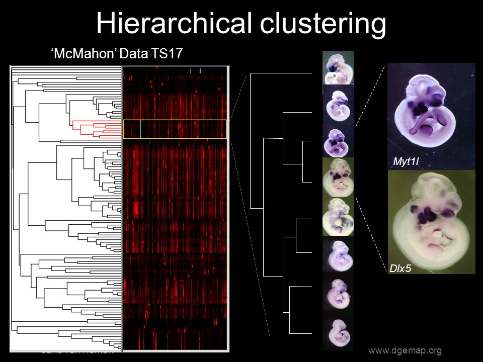 Jano van Hemertwww.dgemap.org Hierarchical clustering Myt1l Dlx5 'McMahon' Data TS17