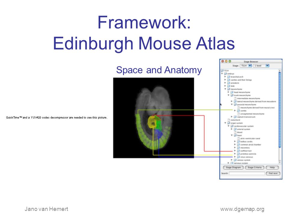 Jano van Hemertwww.dgemap.org Framework: Edinburgh Mouse Atlas Space and Anatomy