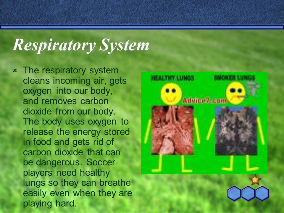 Respiratory System  The respiratory system cleans incoming air, gets oxygen into our body, and removes carbon dioxide from our body.