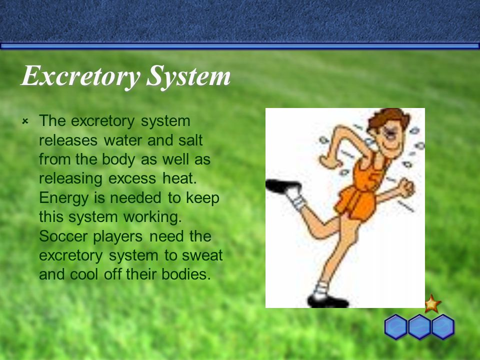 Muscular System  The muscular system produces force to move body parts.