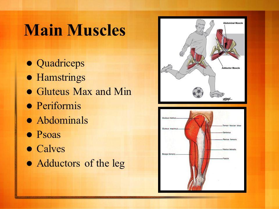 Main Muscles Quadriceps Hamstrings Gluteus Max and Min Periformis Abdominals Psoas Calves Adductors of the leg