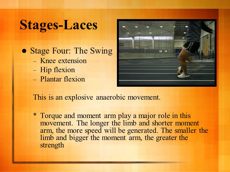 Stages-Laces Stage Four: The Swing – Knee extension – Hip flexion – Plantar flexion This is an explosive anaerobic movement. *Torque and moment arm pl