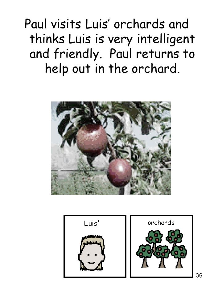 36 Paul visits Luis' orchards and thinks Luis is very intelligent and friendly. Paul returns to help out in the orchard.