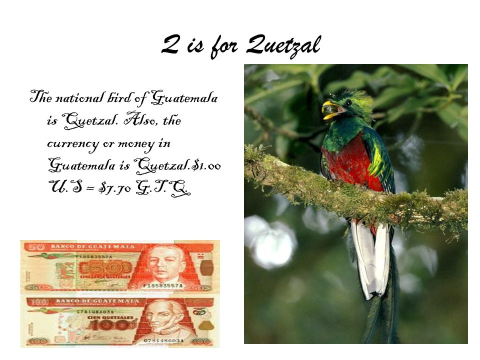 Q is for Quetzal The national bird of Guatemala is Quetzal.
