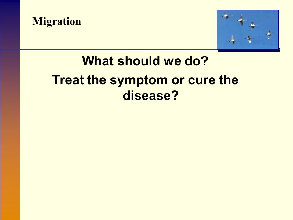Migration What should we do Treat the symptom or cure the disease