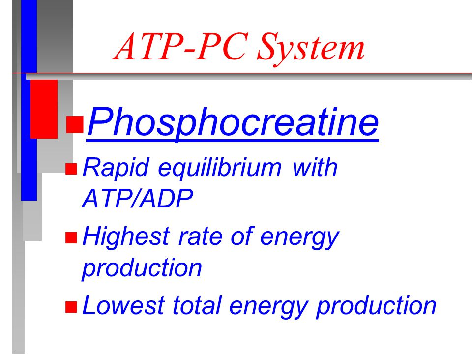 ATP-PC System n Phosphocreatine n Rapid equilibrium with ATP/ADP n Highest rate of energy production n Lowest total energy production