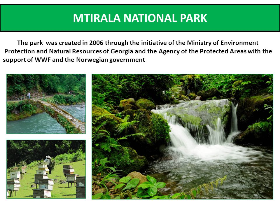 MTIRALA NATIONAL PARK The park was created in 2006 through the initiative of the Ministry of Environment Protection and Natural Resources of Georgia and the Agency of the Protected Areas with the support of WWF and the Norwegian government