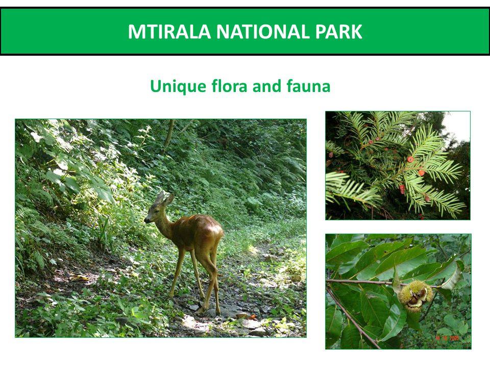 MTIRALA NATIONAL PARK Unique flora and fauna
