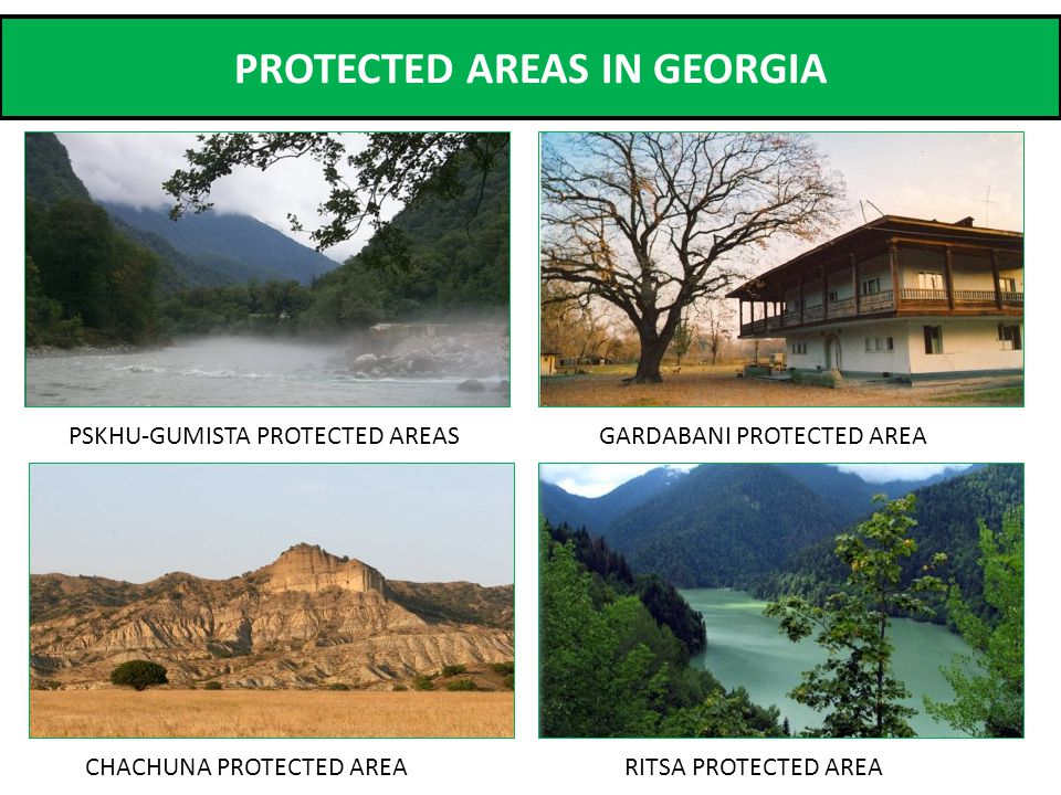 PROTECTED AREAS IN GEORGIA CHACHUNA PROTECTED AREA GARDABANI PROTECTED AREAPSKHU-GUMISTA PROTECTED AREAS RITSA PROTECTED AREA