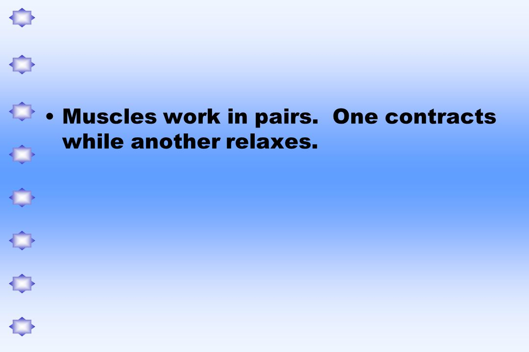 Muscles work in pairs. One contracts while another relaxes.