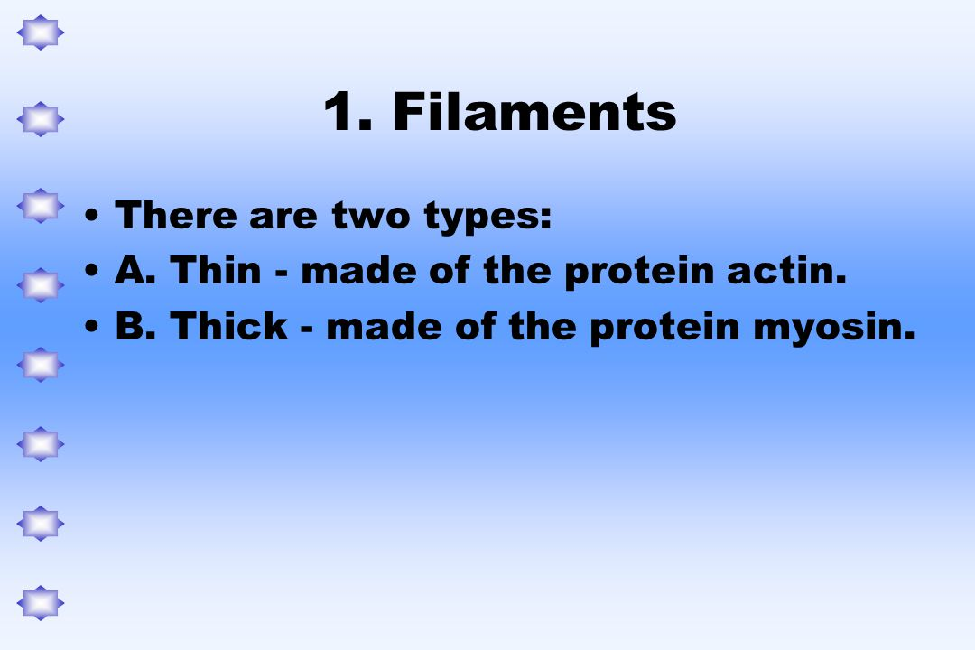 1. Filaments There are two types: A. Thin - made of the protein actin.