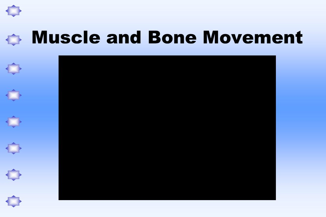Muscle and Bone Movement