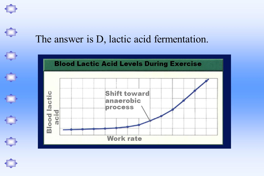 The answer is D, lactic acid fermentation.