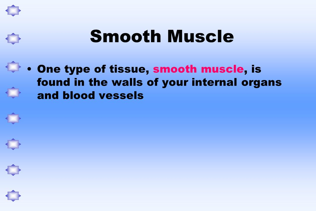 Smooth Muscle One type of tissue, smooth muscle, is found in the walls of your internal organs and blood vessels