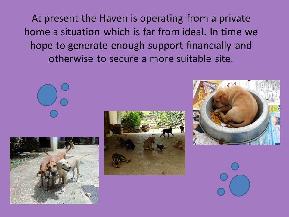 At present the Haven is operating from a private home a situation which is far from ideal. In time we hope to generate enough support financially and