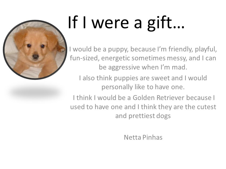 If I were a gift… I would be a puppy, because I'm friendly, playful, fun-sized, energetic sometimes messy, and I can be aggressive when I'm mad.