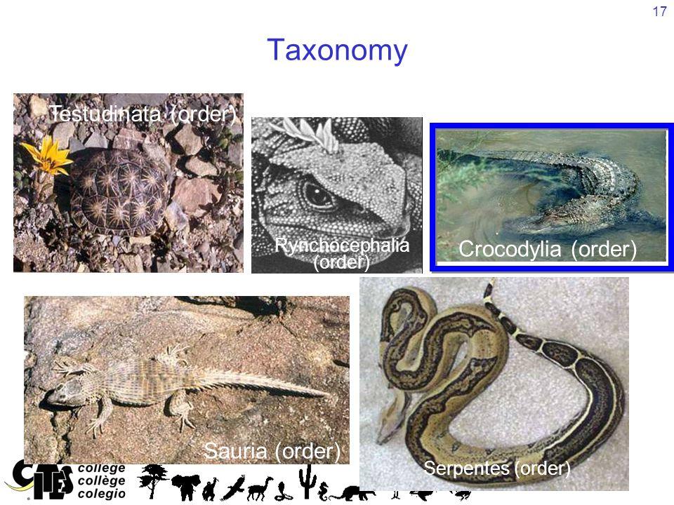 17 Taxonomy Reptilia (class) Sauria (order) Serpentes (order) Testudinata (order) Crocodylia (order) Rynchocephalia (order)