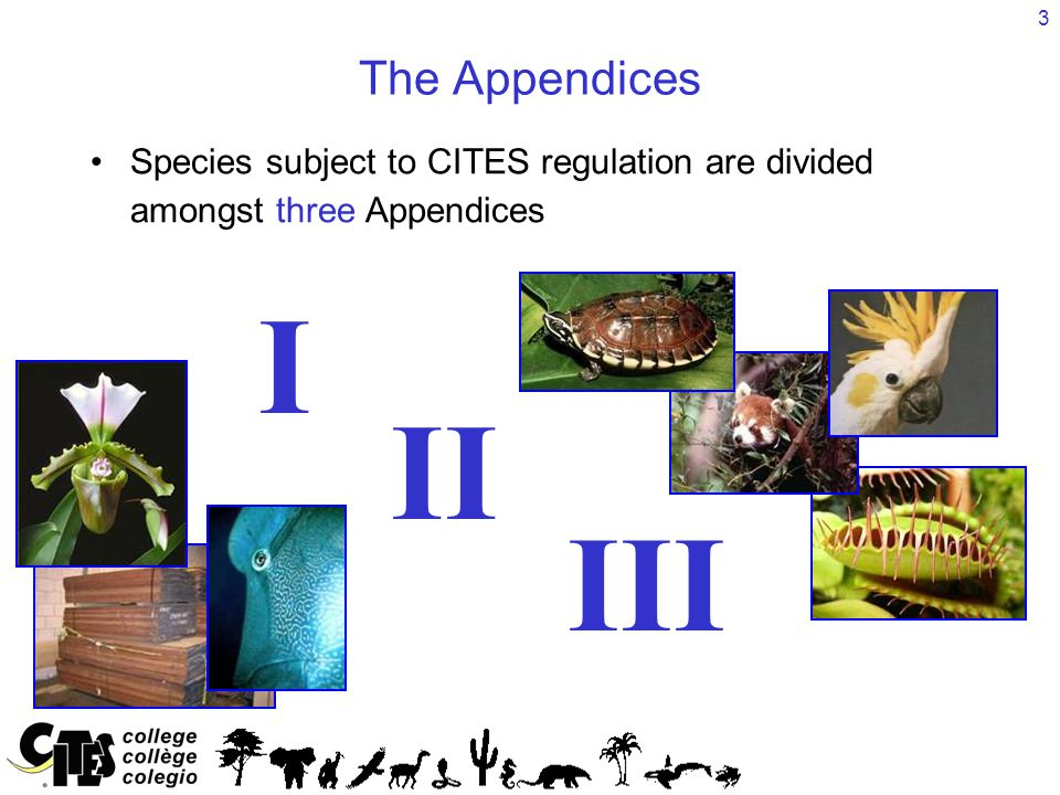 3 The Appendices Species subject to CITES regulation are divided amongst three Appendices I II III