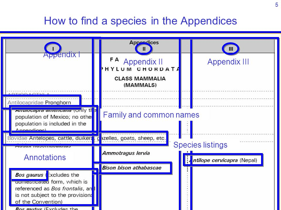 5 Appendix I Appendix IIAppendix III Family and common names Species listings Annotations