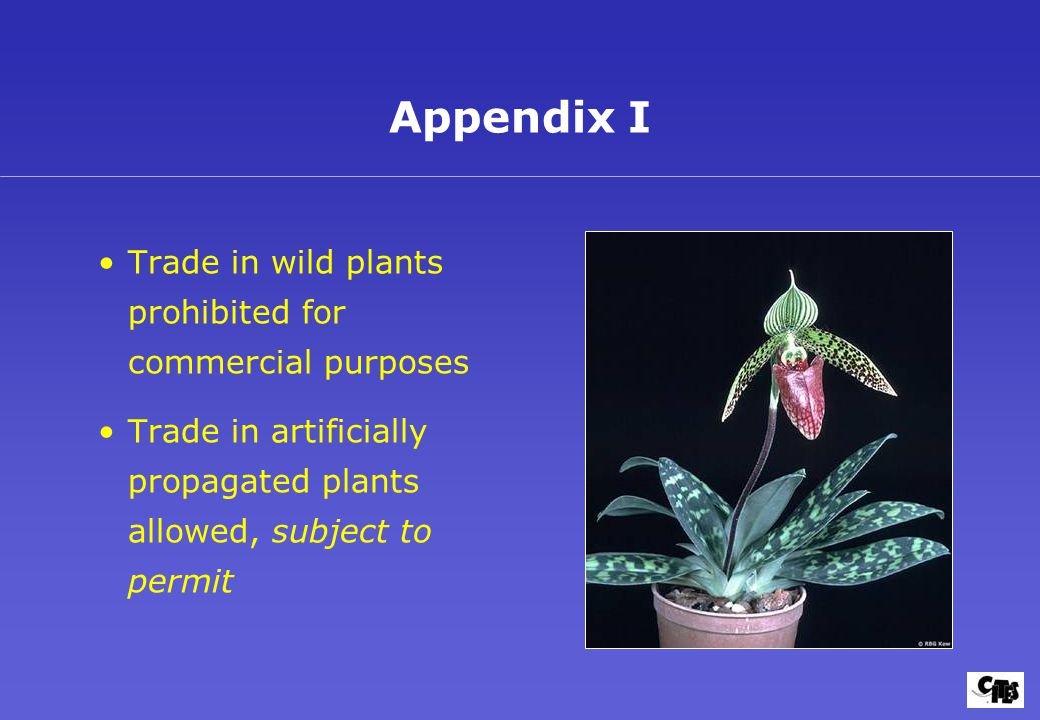 Trade in wild plants prohibited for commercial purposes Trade in artificially propagated plants allowed, subject to permit Appendix I