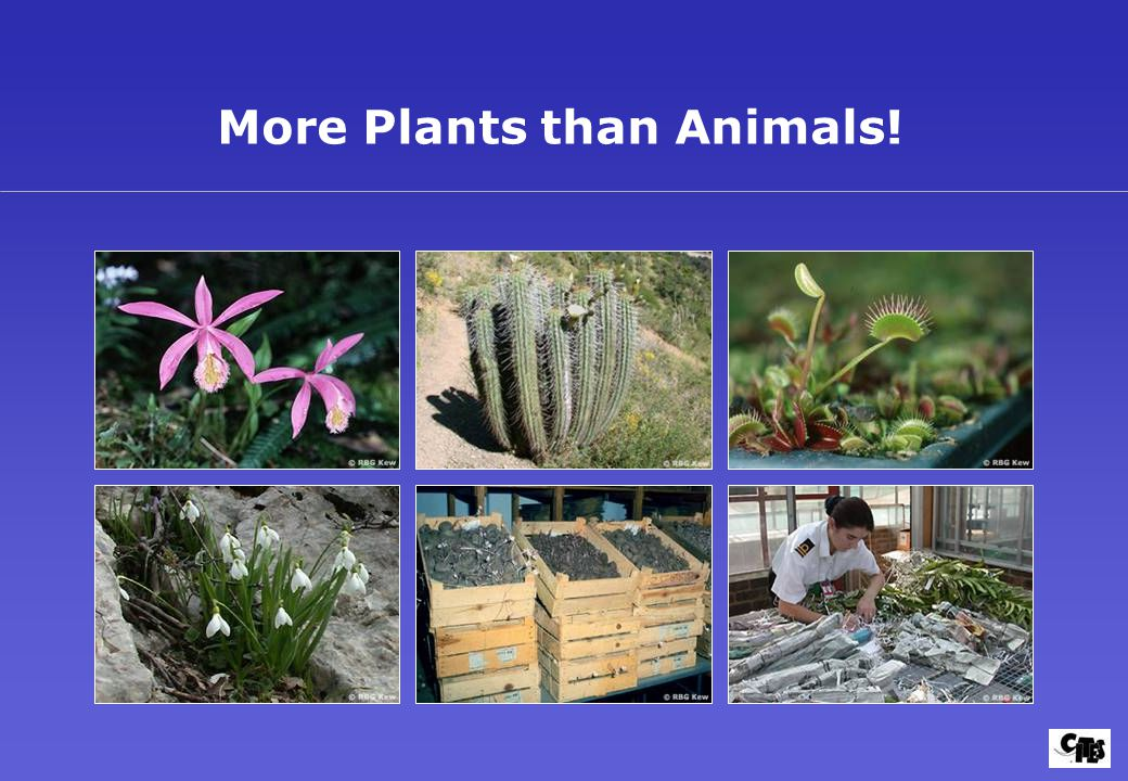 More Plants than Animals!