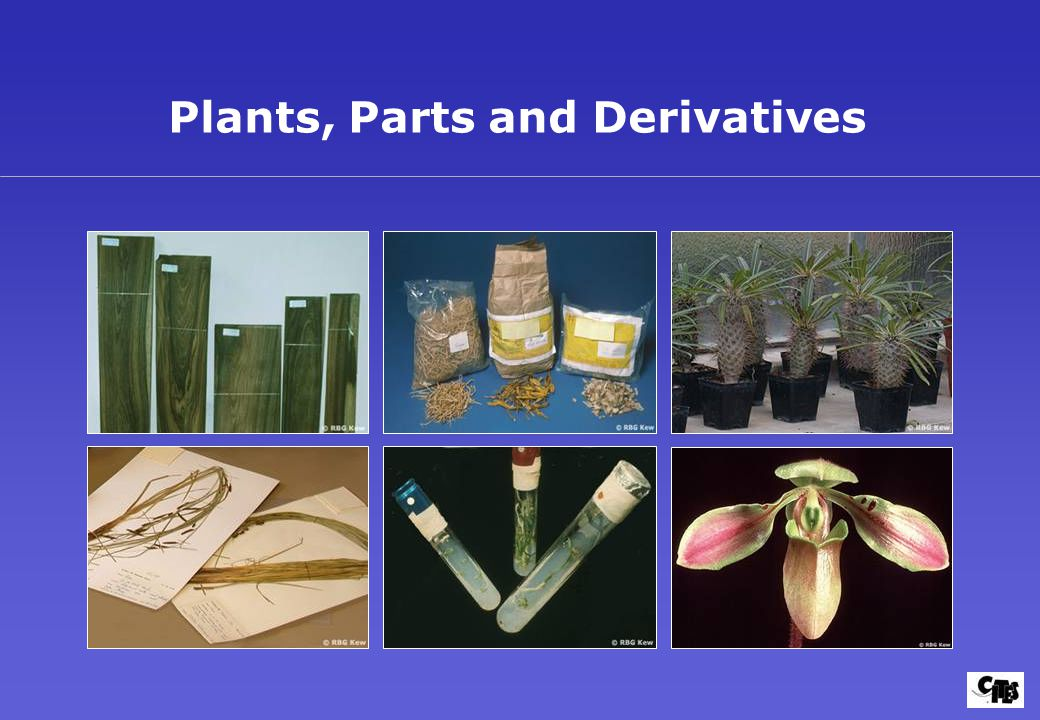 Plants, Parts and Derivatives