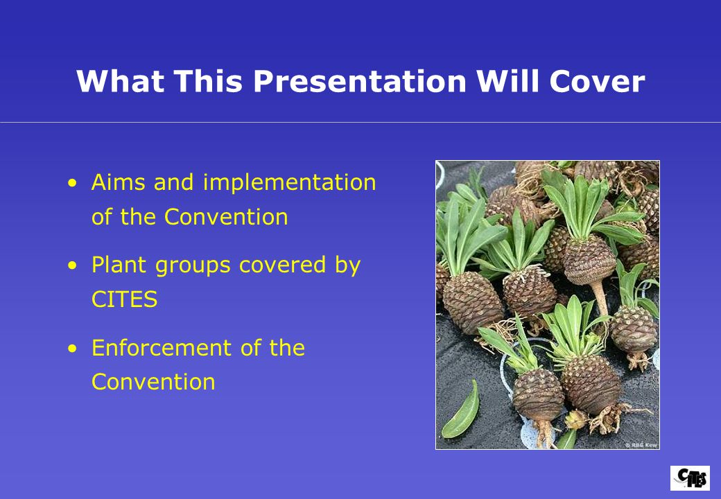 What This Presentation Will Cover Aims and implementation of the Convention Plant groups covered by CITES Enforcement of the Convention