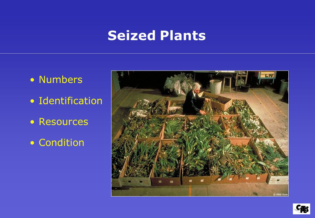 Seized Plants Numbers Identification Resources Condition