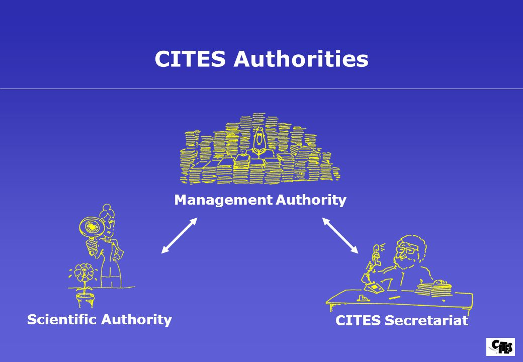 CITES Authorities Management Authority Scientific Authority CITES Secretariat