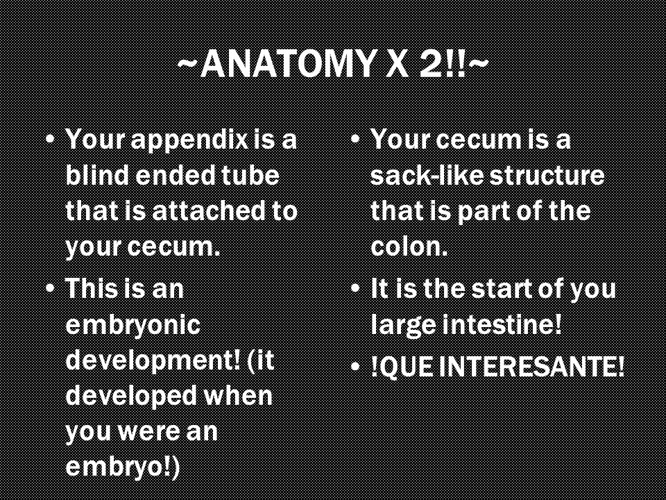 ~ANATOMY X 2!!~ Your appendix is a blind ended tube that is attached to your cecum.