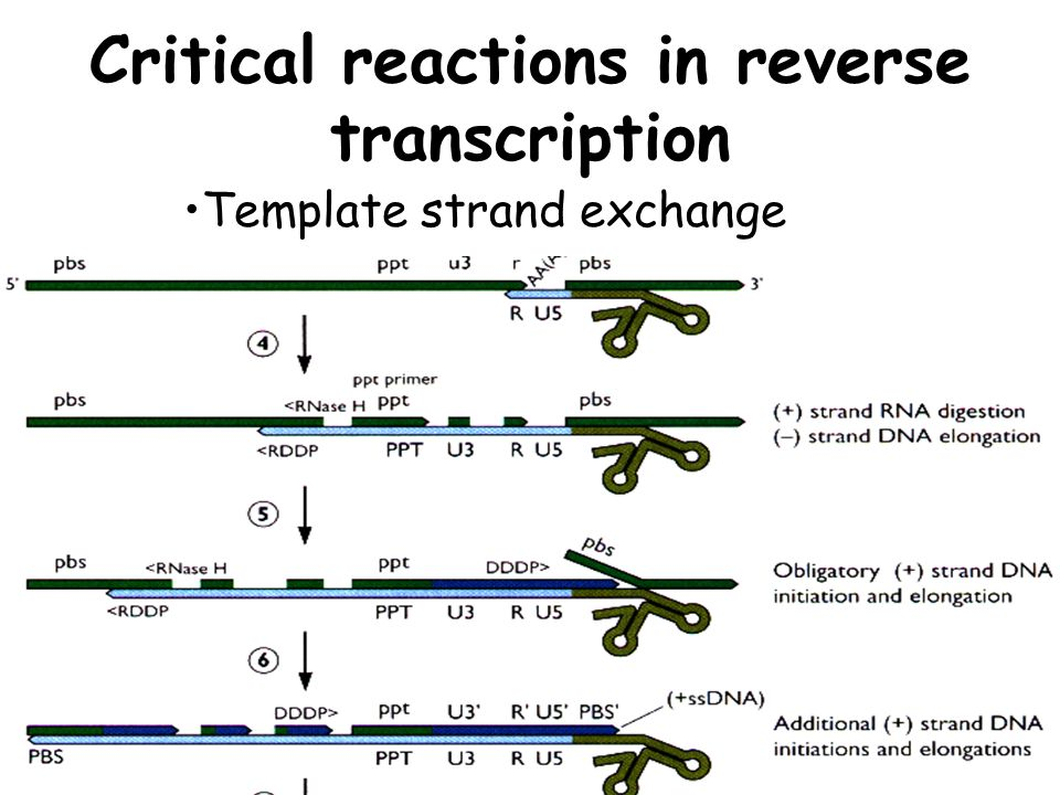 Critical reactions in reverse transcription Template strand exchange