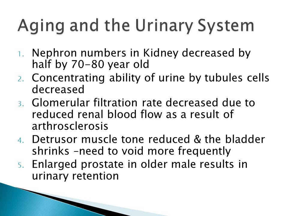 1. Nephron numbers in Kidney decreased by half by 70-80 year old 2.