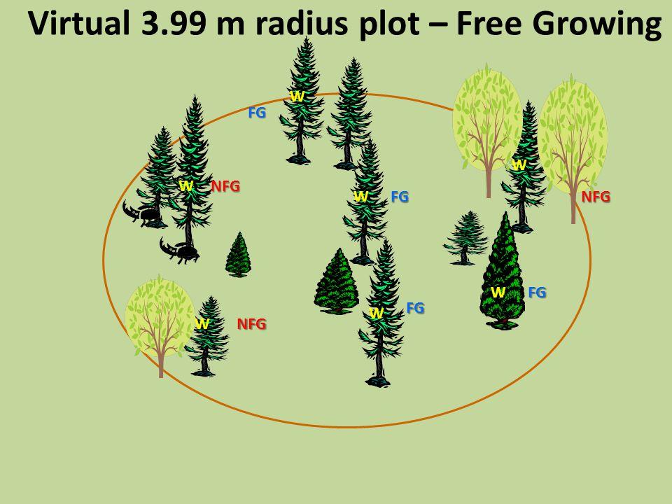 Virtual 3.99 m radius plot – Free Growing W W W W W W WFG FG FG FG PFG NFG NFG NFG
