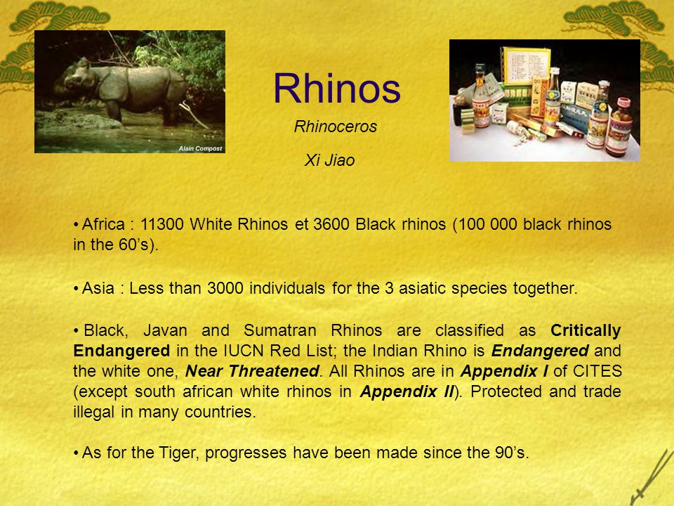 Rhinos Africa : 11300 White Rhinos et 3600 Black rhinos (100 000 black rhinos in the 60's). Asia : Less than 3000 individuals for the 3 asiatic specie