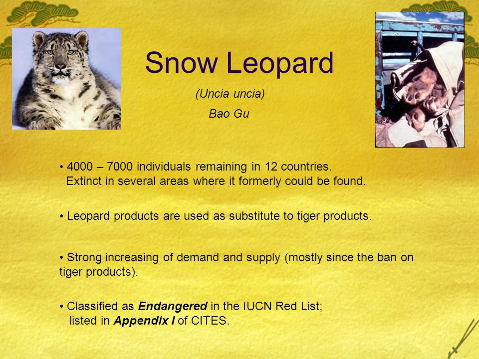 Snow Leopard Leopard products are used as substitute to tiger products. 4000 – 7000 individuals remaining in 12 countries. Extinct in several areas wh