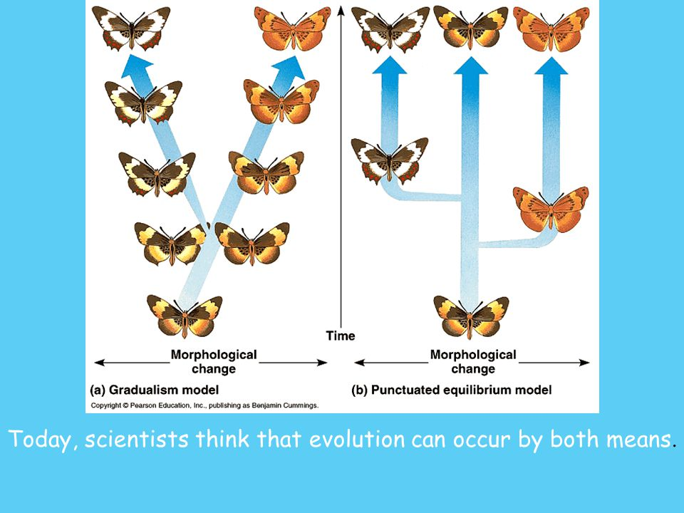 Today, scientists think that evolution can occur by both means.