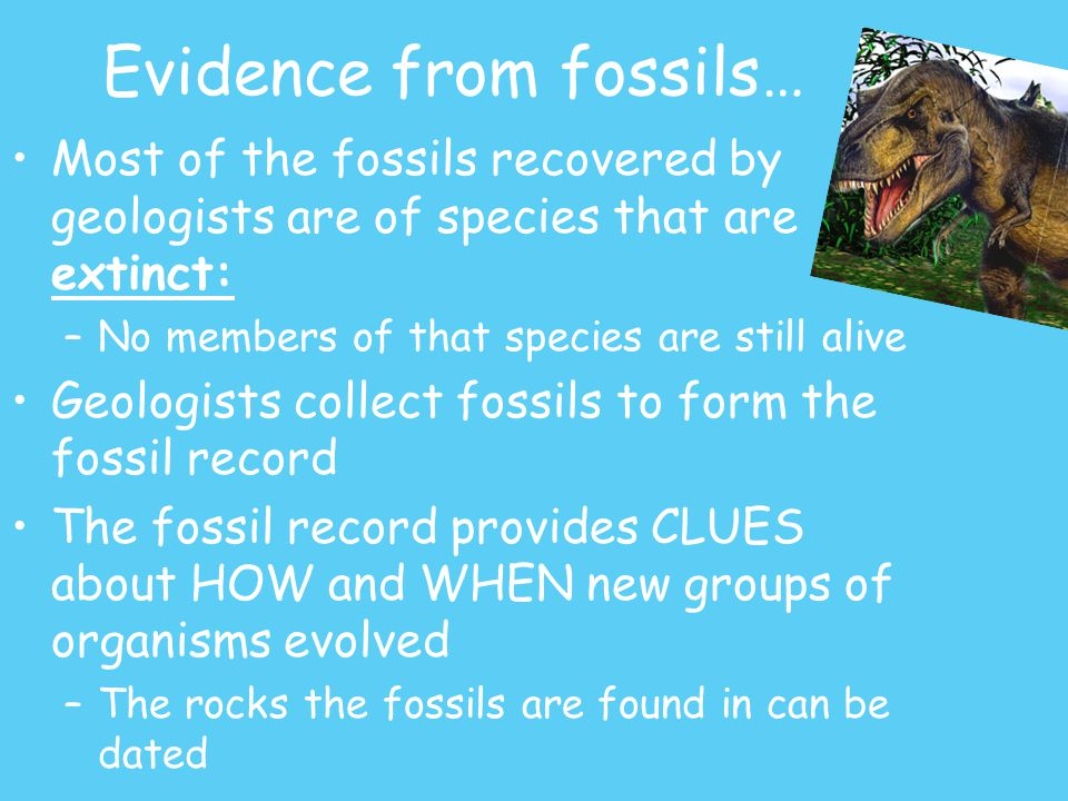 Evidence from fossils… Most of the fossils recovered by geologists are of species that are extinct: –No members of that species are still alive Geologists collect fossils to form the fossil record The fossil record provides CLUES about HOW and WHEN new groups of organisms evolved –The rocks the fossils are found in can be dated