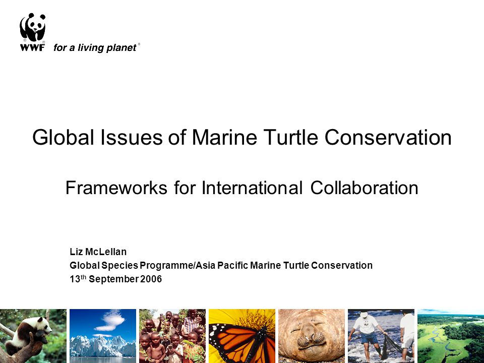 Global Issues of Marine Turtle Conservation Frameworks for International Collaboration Liz McLellan Global Species Programme/Asia Pacific Marine Turtl