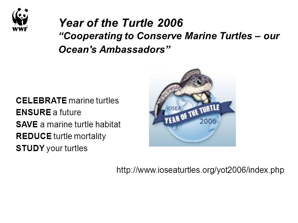 "Year of the Turtle 2006 ""Cooperating to Conserve Marine Turtles – our Ocean's Ambassadors"" CELEBRATE marine turtles ENSURE a future SAVE a marine turt"