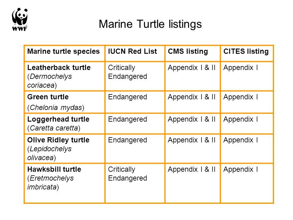 Marine Turtle listings Marine turtle speciesIUCN Red ListCMS listingCITES listing Leatherback turtle (Dermochelys coriacea) Critically Endangered Appendix I & IIAppendix I Green turtle (Chelonia mydas) EndangeredAppendix I & IIAppendix I Loggerhead turtle (Caretta caretta) EndangeredAppendix I & IIAppendix I Olive Ridley turtle (Lepidochelys olivacea) EndangeredAppendix I & IIAppendix I Hawksbill turtle (Eretmochelys imbricata) Critically Endangered Appendix I & IIAppendix I