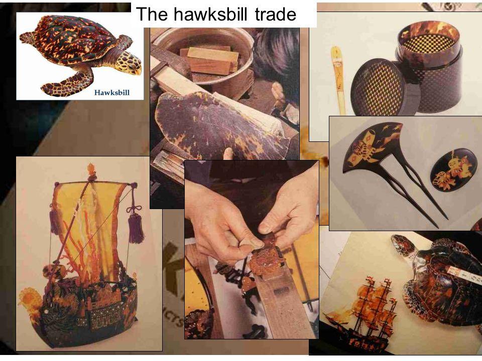 Hawksbill shells - bekko The hawksbill trade