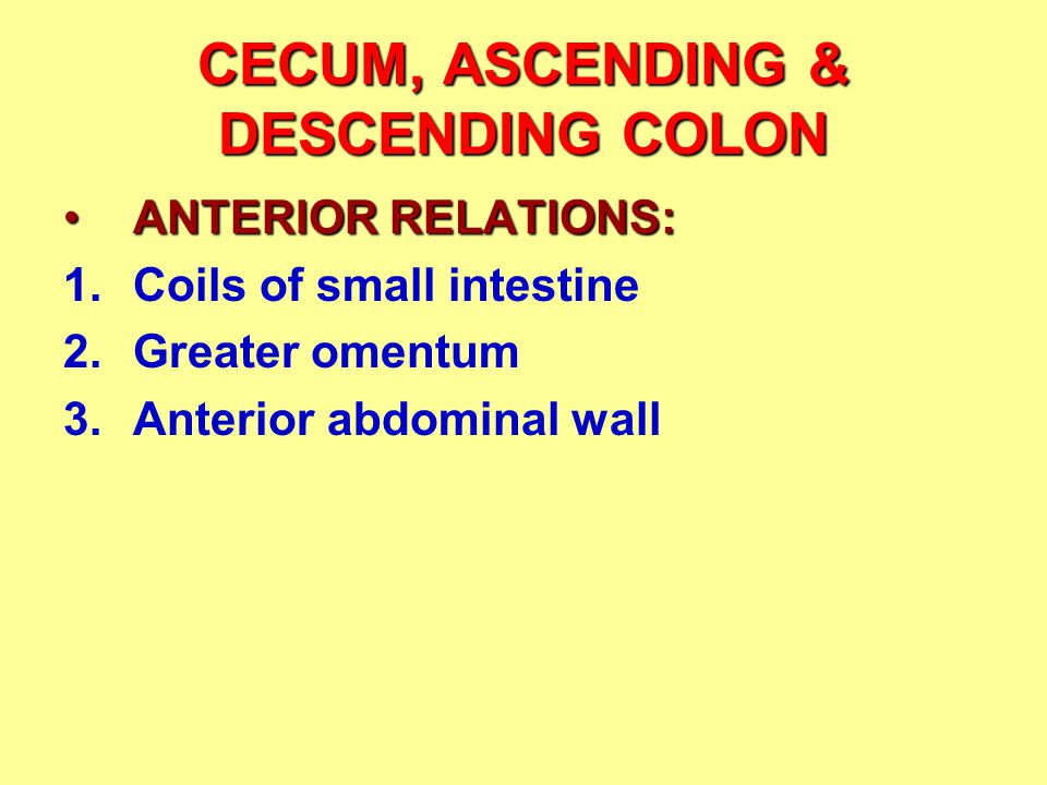 CECUM, ASCENDING & DESCENDING COLON ANTERIOR RELATIONS:ANTERIOR RELATIONS: 1.Coils of small intestine 2.Greater omentum 3.Anterior abdominal wall
