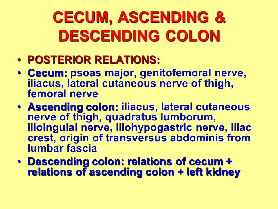 CECUM, ASCENDING & DESCENDING COLON POSTERIOR RELATIONS:POSTERIOR RELATIONS: Cecum:Cecum: psoas major, genitofemoral nerve, iliacus, lateral cutaneous