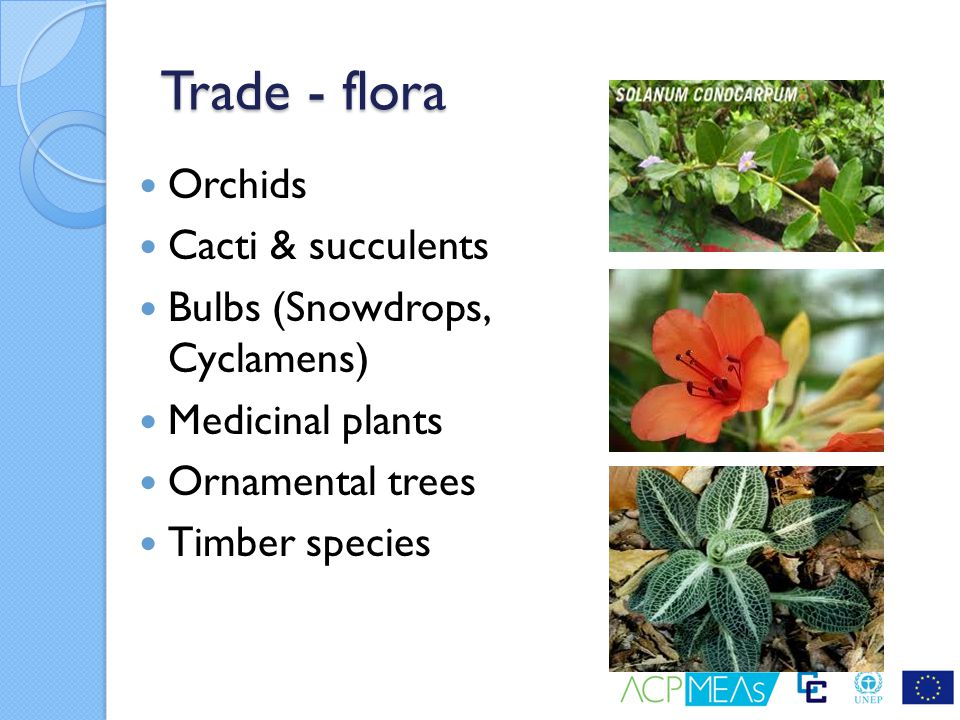 Trade - flora Orchids Cacti & succulents Bulbs (Snowdrops, Cyclamens) Medicinal plants Ornamental trees Timber species
