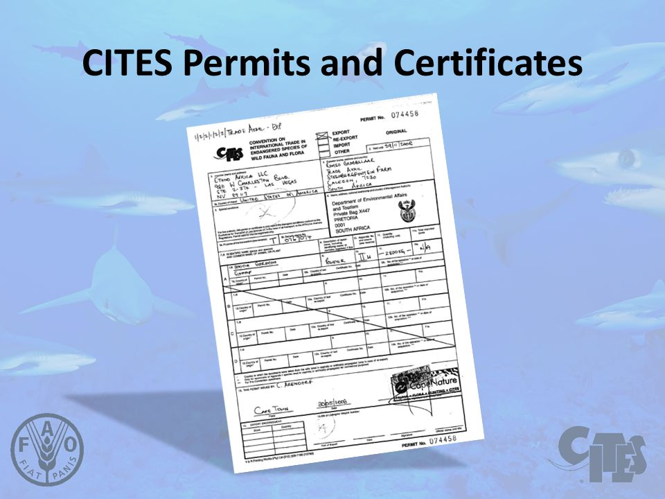 CITES Permits and Certificates