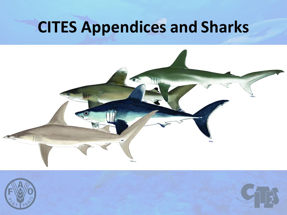 CITES Appendices and Sharks