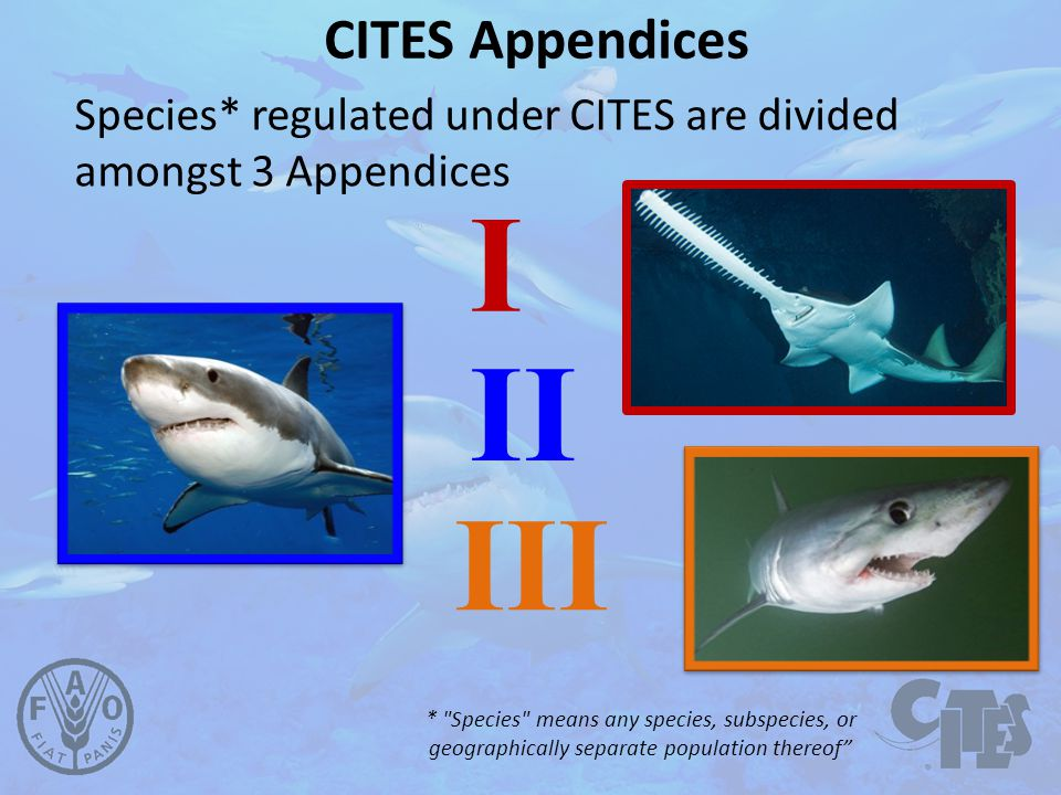 CITES Appendices Species* regulated under CITES are divided amongst 3 Appendices I II III * Species means any species, subspecies, or geographically separate population thereof